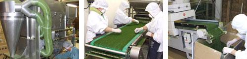 青のり粉生産